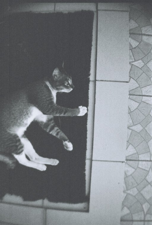 Spotting Stray Cats with the La Sardina!