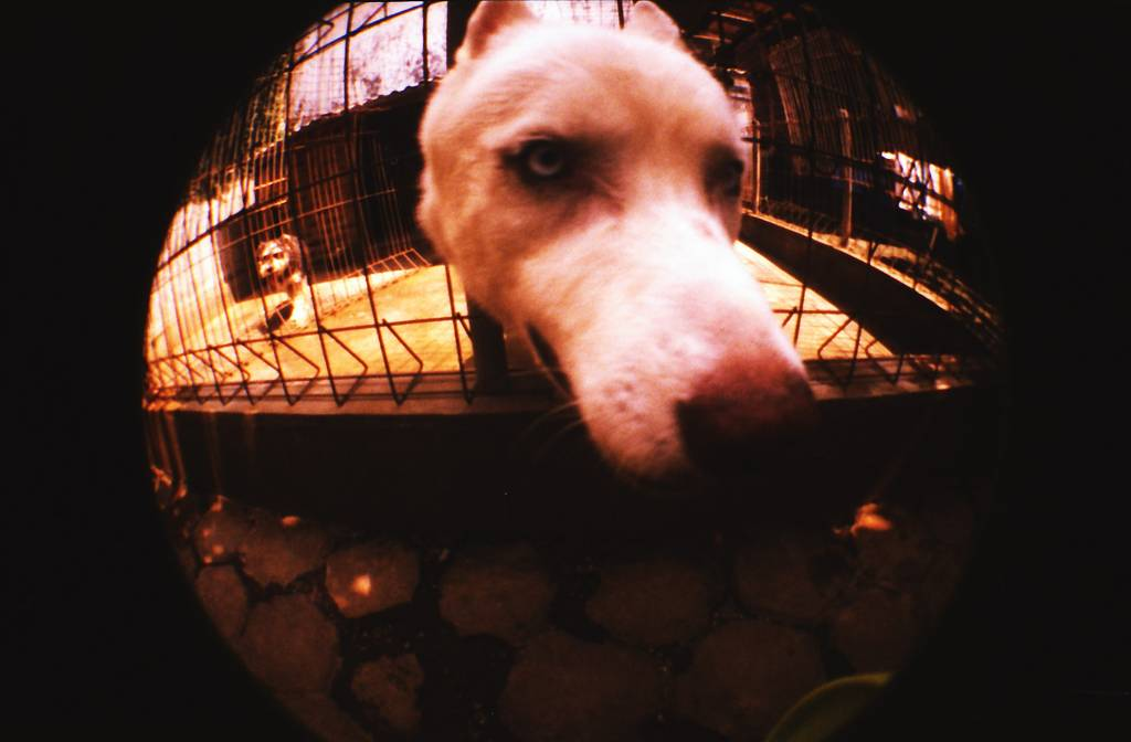 Lomographer For A Day: My Little Sister