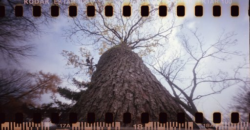 Sharan Pinhole Wide