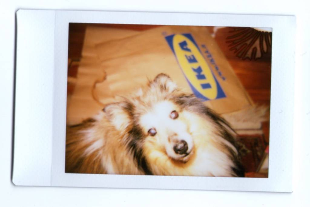 Animal Experimentation with the Diana F+ and Diana Instant Back+