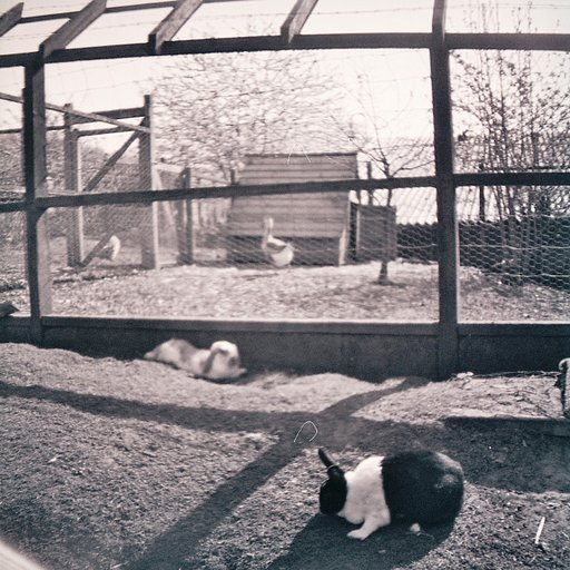Meanwood Valley Urban Farm in Black and White