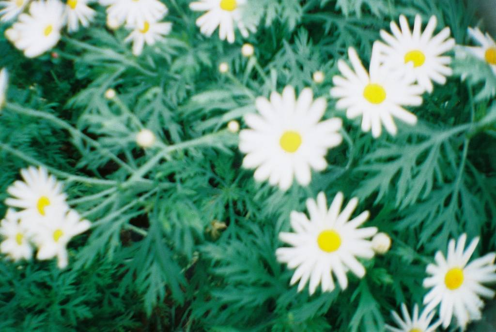 Lomography Color Negative 100 ISO 35mm Film: Lover of the Sun