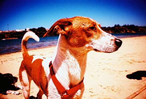 Documenting the Dog Days with La Sardina