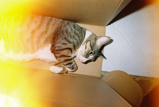 LomoAmigo MONSTER CAT Shoots with the La Sardina