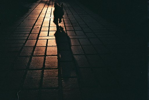Of Whiskers and Tails: An Ode to Pets by the Singapore Lomography Community