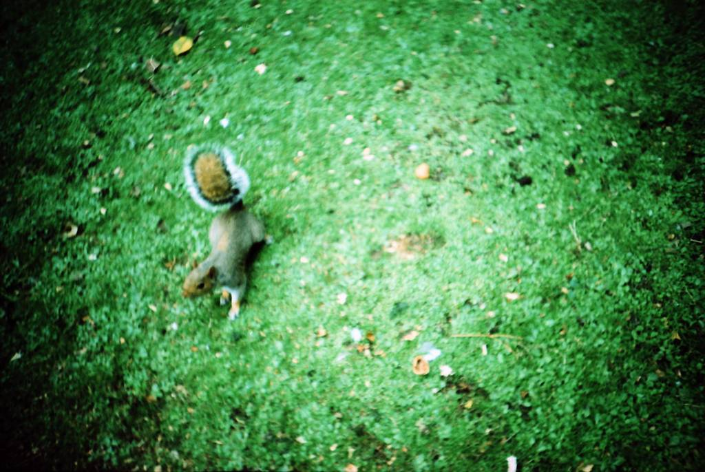 Squirrel Attack at St. James Park