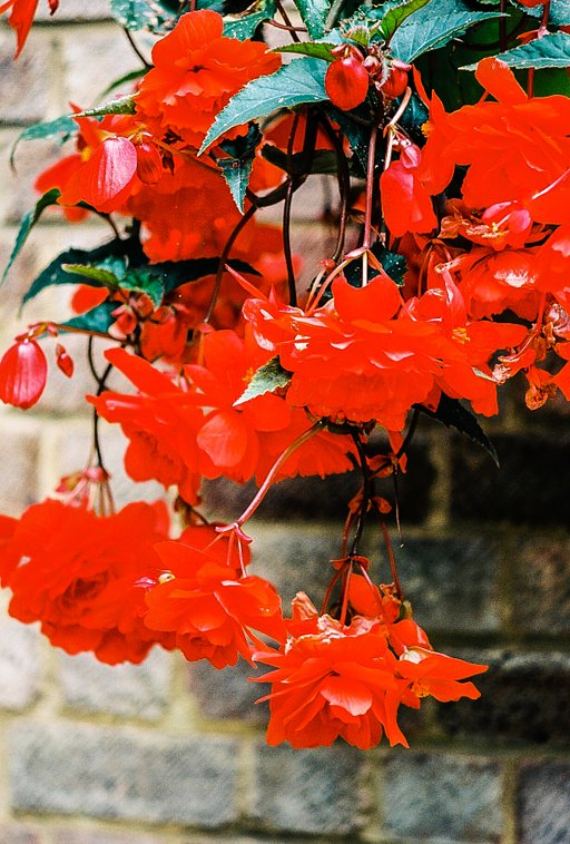 Color Chronicles: Pure Coquelicot