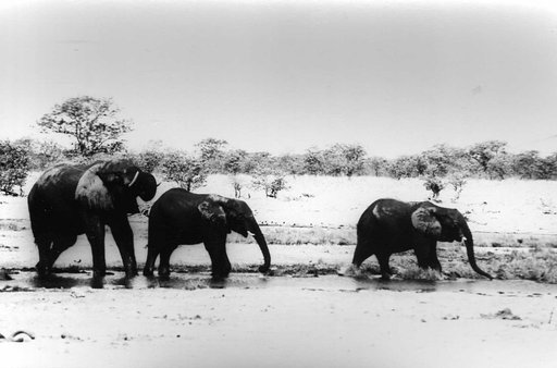 Safari Film Photography Tips