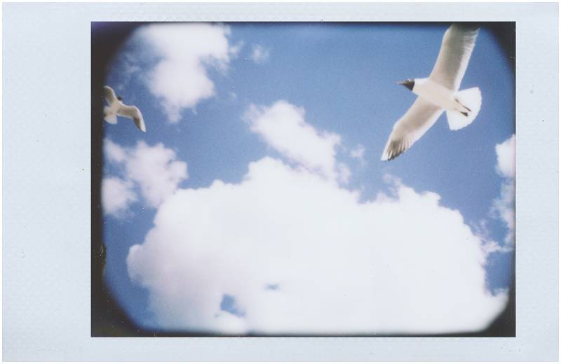 Outdoor Instants Taken with the LC-A+ Instant Camera