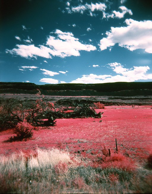 Awesome Albums: EIR Aerochrome Color Infrared 120 and the Holga by kimo