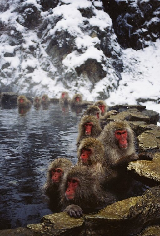 Lomography Day Trips: Snow Monkeys in Japan