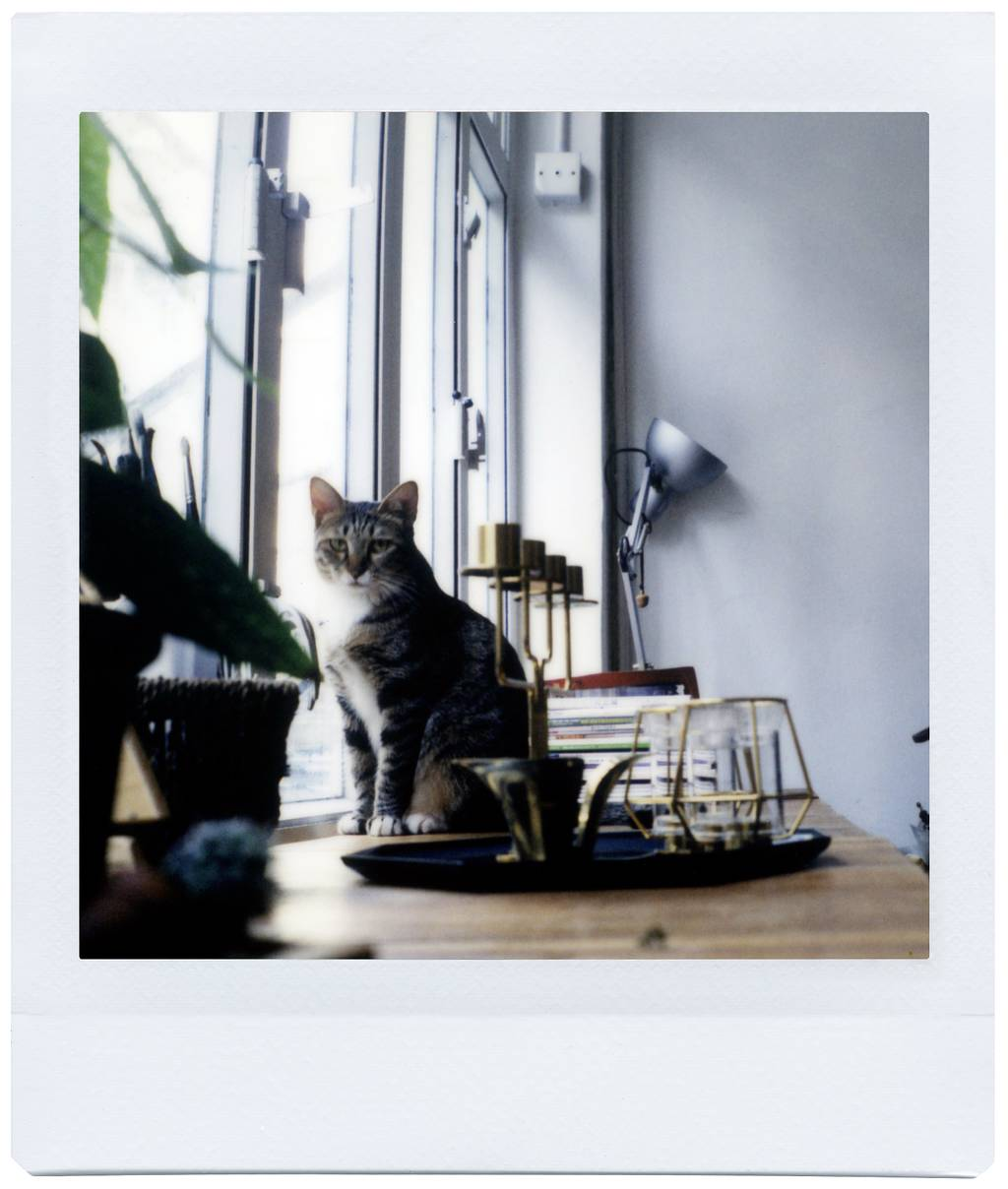 Be Tabula Rasa Studio Blooms with the Lomo'Instant Square