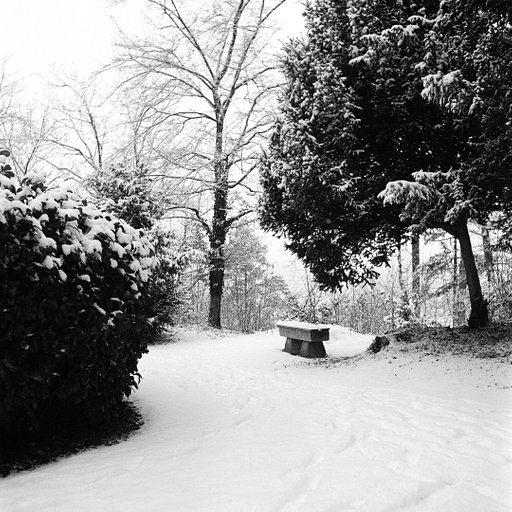 A Snowy Lady Grey by Lomographer jan_onfilm