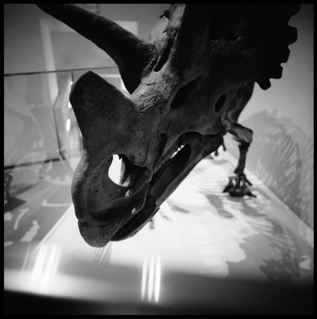 The World According to Herr Willie – Wendiceratops Pinhornensis