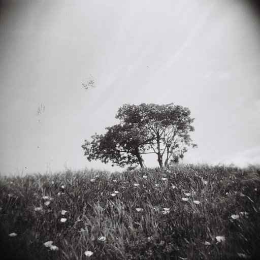 Call For Entry: Holga & Friends Out of the Box Competition