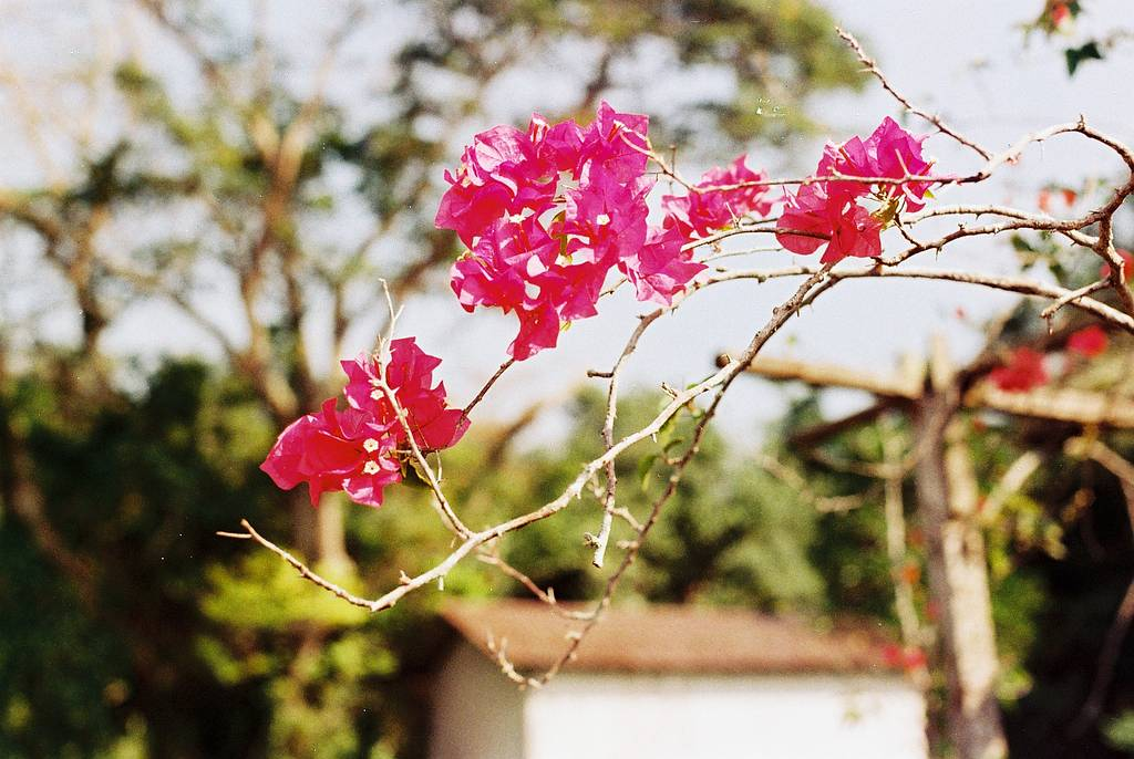 Capture Awesome Colors with Lomography CN 100 35mm