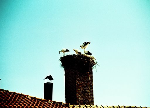 Dolna Banya, Bulgaria: the Home of a Thousand Storks