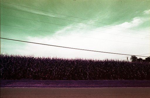 Lomochrome Purple 400: The Purples and Pinks of the Sun and Shade