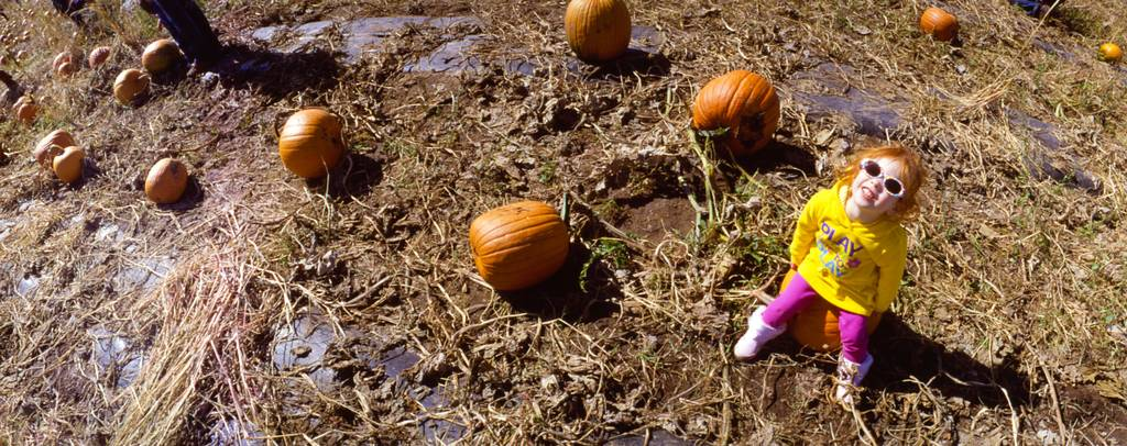 Pumpkin Patch and Corn Maze: Ripe for the Pickin'
