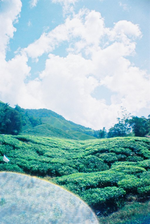 Summer Hot Spots: Escaping the Heat at Cameron Highlands