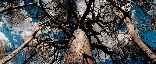 Avenue of the Baobabs, Madagascar - 猢猻樹大道(Avenue of the Baobabs),馬達加斯加