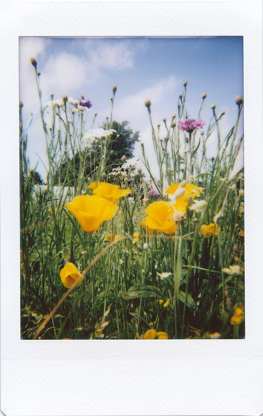 Lomo'Instant Automat: Shooting d'estate con LomoAmigo Martin Smith