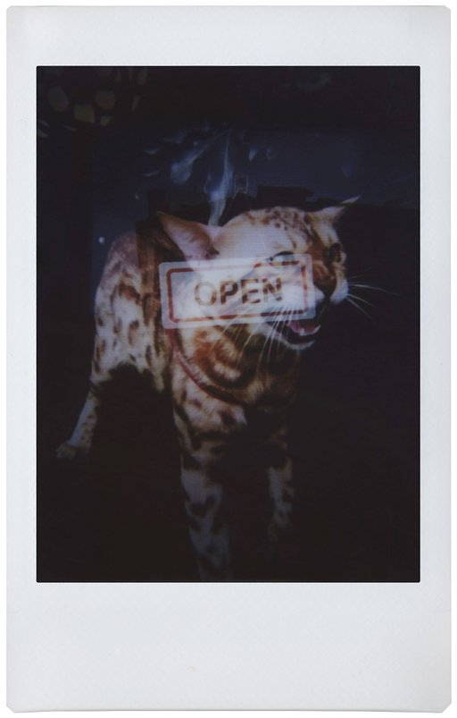 Exploring Art Forms: Scryptk and the Lomo'Instant in Singapore