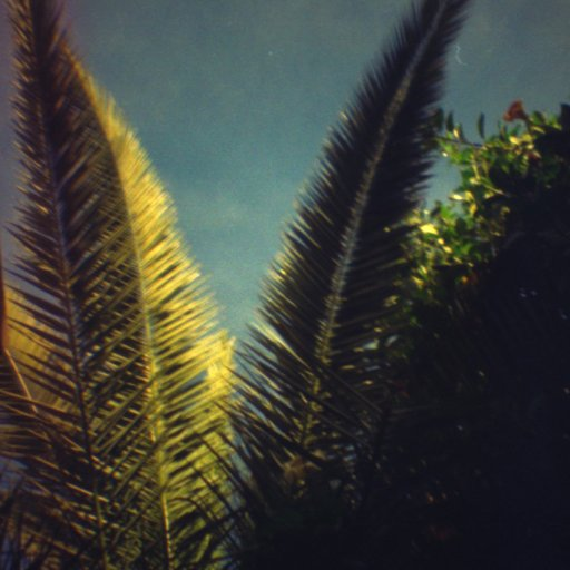 Palm Trees are my favourite subject