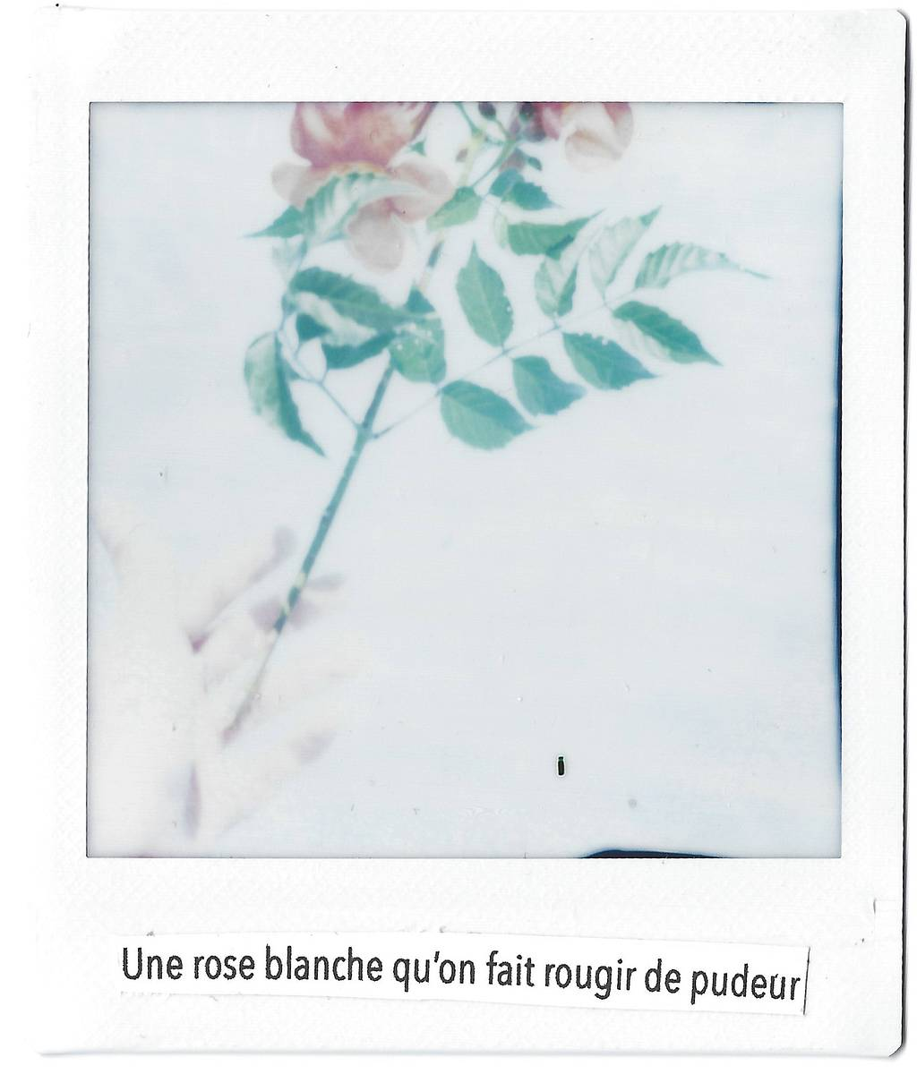 Lomography Workshop with Rose Néon : Instant Photography and Collages