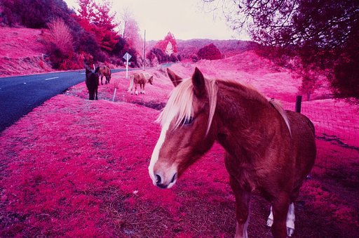 Seeing in Infrared - Photography by Timothy Flower