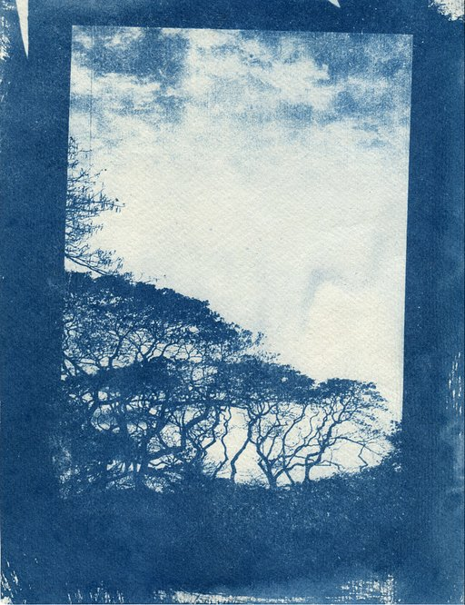 Bolt from the Blue: Cyanotype Workshop