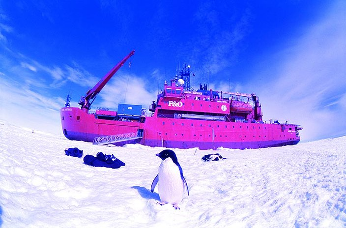 LomoWall Antarctique