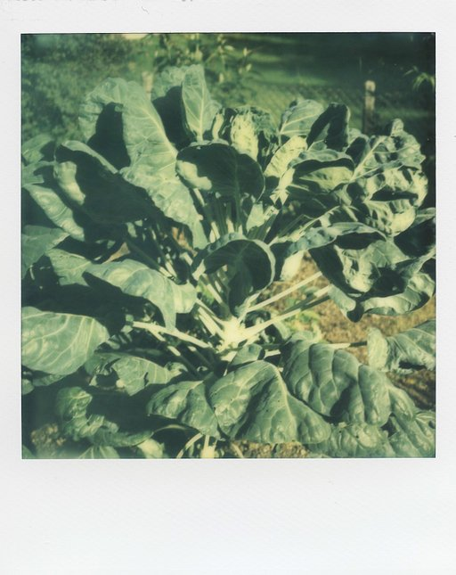 Impossible war mal! - PX70 Color Protection