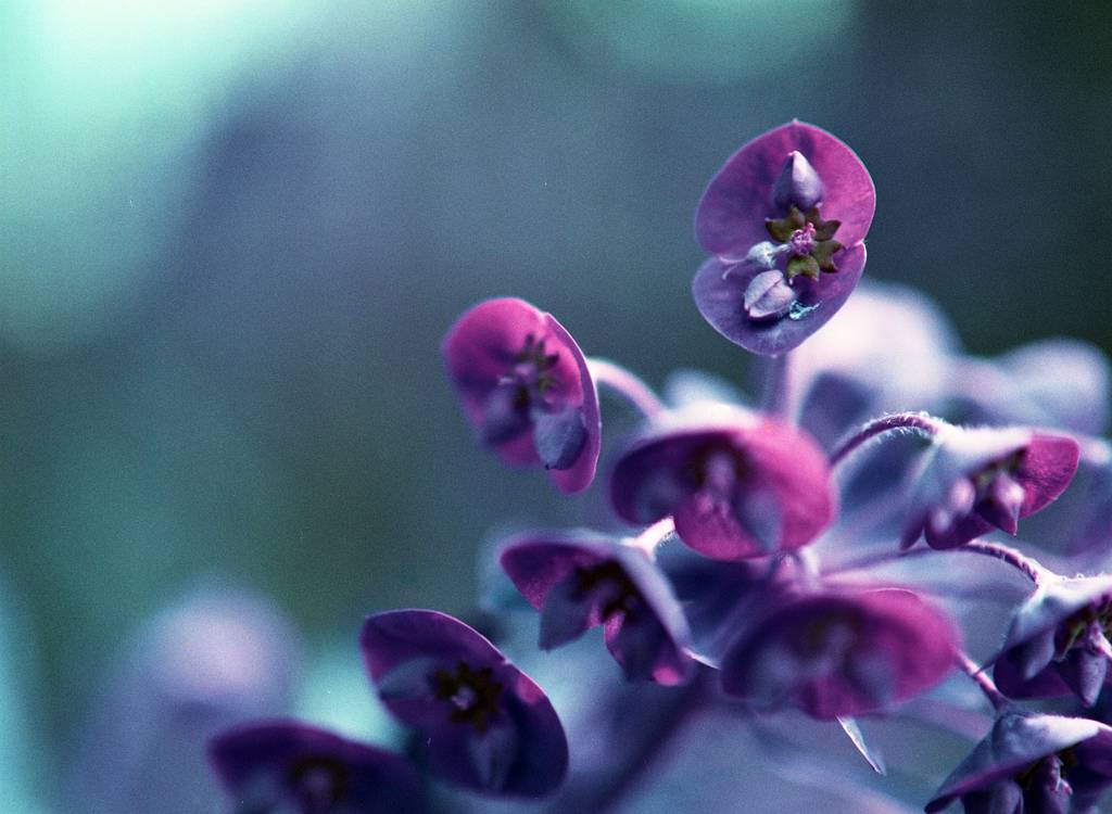 Have an analogue purple springtime with the LomoChrome Purple film!