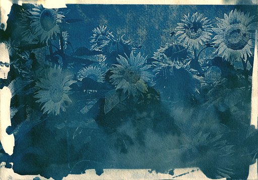 Cyanotype Experiments – by Velvet-Daddy