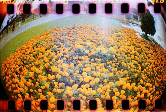 Aurabuntinx is our LomoHome of the Day!