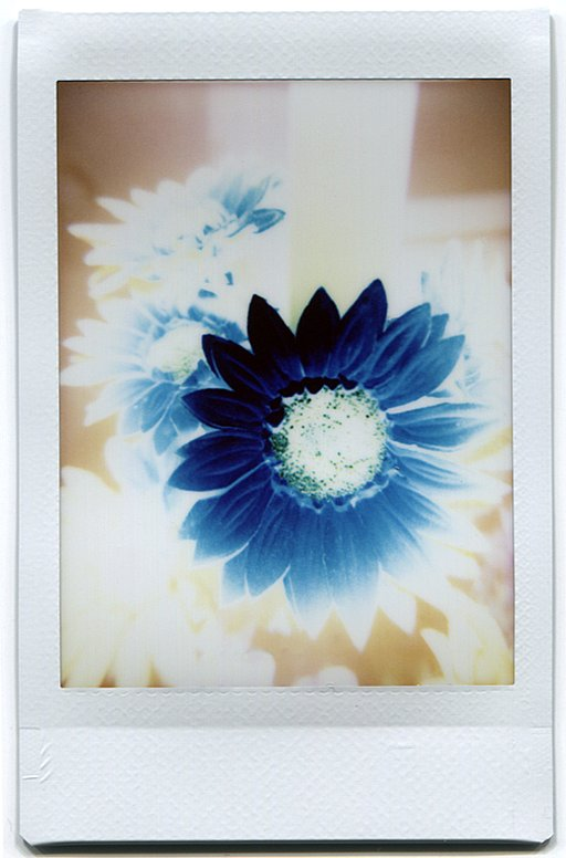 Cool Negative-Like Lomo'Instant Snaps from the Community
