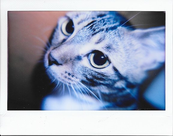 Cozy Up with the Lomo'Instant Wide