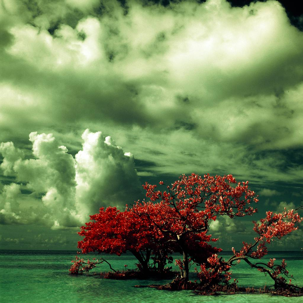 The World in Infrared
