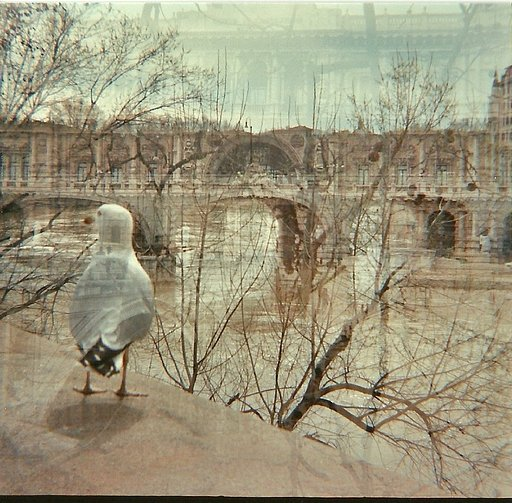 Don't forget Lomography Prophecy #7: Let Loose