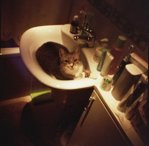 My Favorite Cat Photos #2 - Tabby Cat Only!! お気に入りの猫写真No.2 ーとらねこばっかり
