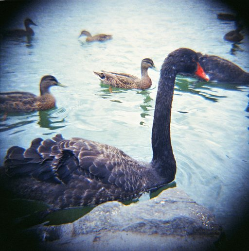 Love at First Lomo: Diana F+