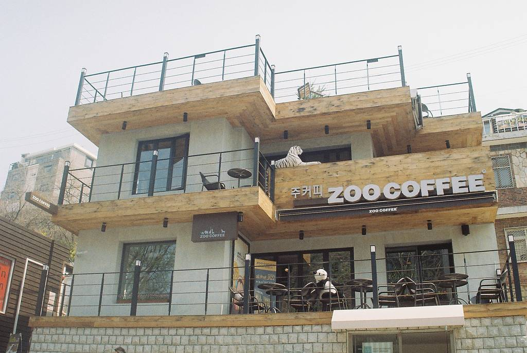 Zoo Coffee, a Menagerie in a Coffee Cup