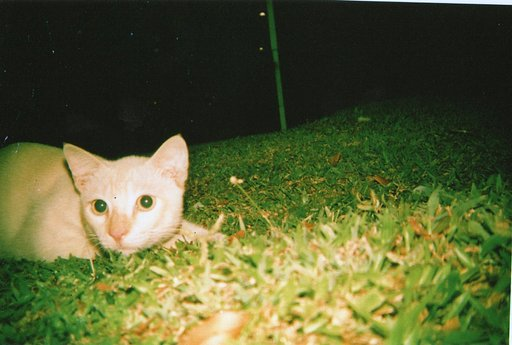 Every Lomographer's Best Models: Cats!
