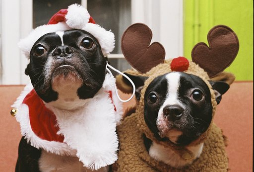 Gleeful and Merry Holiday Pet Photos from the Community