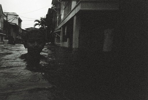 The Cats and the Happy People of the Philippines in Black and White (An Ondoy Experience )
