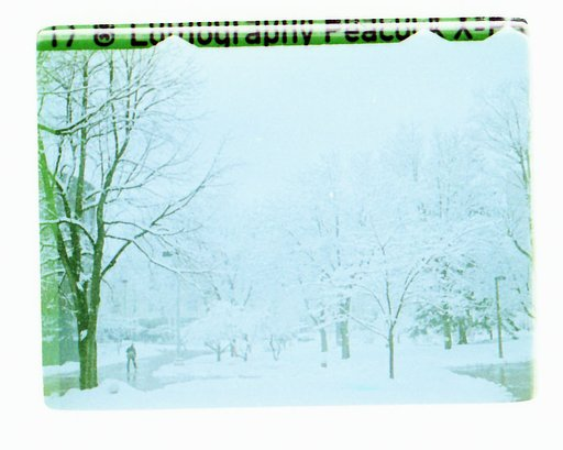 The Peacock in White: Snowy Shots in 110 Cross-Processed