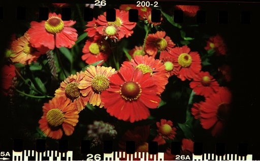 Sprocket Rocket Close Ups