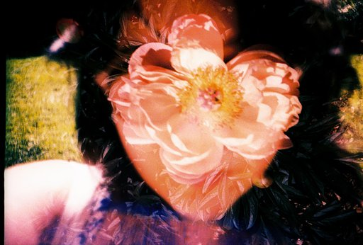 Workshop Highlights: May Flowers Walking Tour