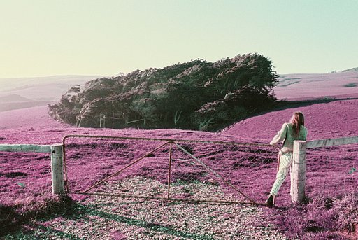 Mystical New Zealand Sceneries on LomoChrome Purple by Henry O. Head